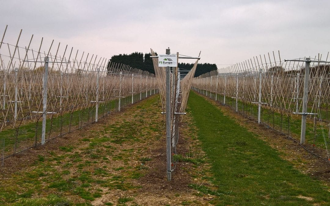 R f rences archieven fruit support europe - Europe cloture materiaux ...