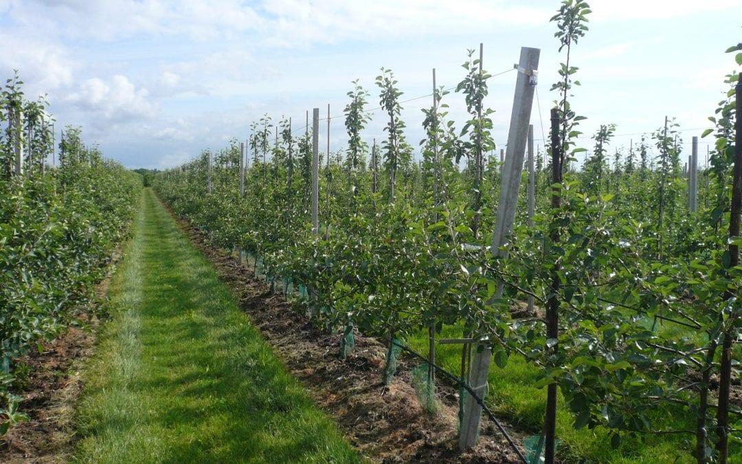 Droit de la haye pays bas fruit support europe - Europe cloture materiaux ...