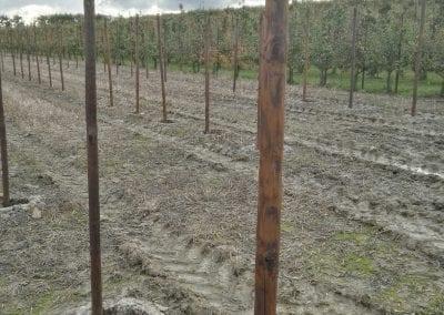 Aanplant met creo boompalen